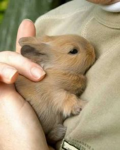 I'm pretty sure I need a bunny