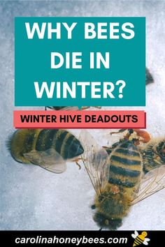 Organic Gardening, Gardening Tips, Hives And Honey, Honey Bees, How To Start Beekeeping, Dead Bees, Bee Facts, Garden Solutions, Backyard Beekeeping
