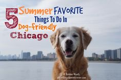 Chicago is a dog-friendly city and offers many activities for visitors who bring their dogs. We live in the suburbs and we enjoy going to the city on the weekend. Summer is our favorite time to visit. Here are our Top 5 Summer Favorite Things To Do In Dog-Friendly Chicago 1. Cruise Chicago With Your …