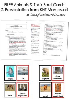 Get free animals and their feet cards and presentation from KHT Montessori and learn more about the KHT Montessori online Montessori certificate course!