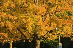 """""""Autumn…the year's last, loveliest smile.""""    ~William Cullen Bryant    The changing leaves announce fall's arrival in Monroe Park.    -Photo Allen Jones, VCU University Relations"""