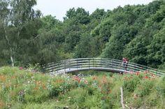 Elbow Bridge frames poppies on the river banks of the River Trent Newark On Trent, River Bank, Garden Bridge, Banks, Poppies, Frames, Outdoor Structures, Frame, Poppy