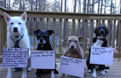 Tip #298  www.peaceandpaws.org Breed Specific Legislation, Funny Animals, Cute Animals, Paws Rescue, Dog Rules, Embedded Image Permalink, Twinkle Twinkle, Dog Breeds, Creepy
