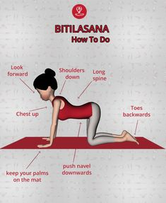 or Its name is derived from Sanskrit words, Bitila meaning cow, and asana meaning pose or posture.best yoga poses for sittings jobs . Cow Pose Yoga, Cool Yoga Poses, Learn Yoga, How To Do Yoga, Yoga Asanas Names, Ashtanga Vinyasa Yoga, Iyengar Yoga, Yoga Facts, Yoga Moves