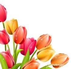 весенние цветы векторный клипарт