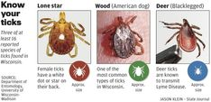 Ticks carry more than Lyme disease to Wisconsin back yards, officials say : Wsj