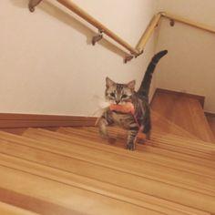 今日も猫じゃらしの配達がありました。
