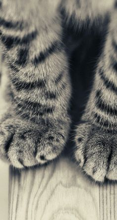 #cat #paws #wallpaper