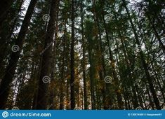 Photo about Forest landscape. Image of trees, forest, landscape - 130574369