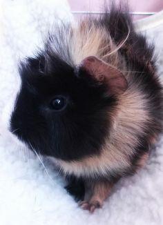Little sweet Orna