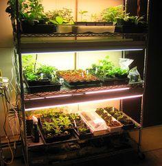 Northern Exposure Gardening: My Indoor Growing Setup