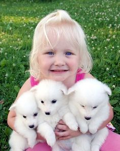 Adorable Home Raised American Eskimo Puppies for sale, Puppies are AKC registered, vet checked, Micro chip, wormed and faces no health problems, they are all potty trained and well socialized with kids and other animals and will make the perfect companion to a pet loving home, they are ready to join their new homes, secureRead More The post Joy – AKC American Eskimo puppers for sale appeared first on VIP Puppies - Puppy Finder - Puppies for Sale & Puppies for Adoption. If you've enjoyed this…