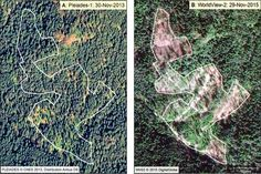 Scientists call the deforestation in Mexico catastrophic for the iconic insect whose population has plummeted.
