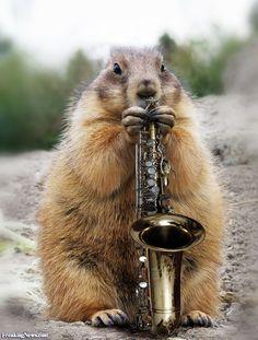 saxophone - Google zoeken