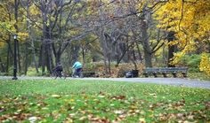 rent a bike and ride through Central Park
