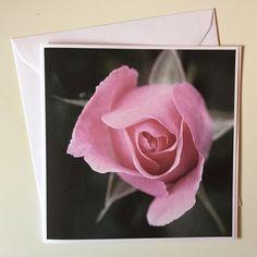 Kort: Rose Rose, Flowers, Plants, Pink, Roses, Florals, Plant, Flower, Bloemen