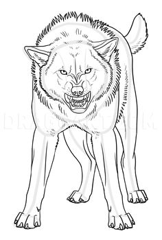 Art Drawings Sketches Simple, Easy Drawings, Wolf Face Drawing, Anime Lobo, Wolf Poses, Angry Wolf, Angry Animals, Wolf Sketch, Werewolf Art