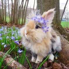 Photo by Sumba, Pumba🐰MTL 🇨🇦 on April Image may contain: grass, outdoor and nature via Cute Bunny Pictures, Cute Animal Photos, Animal Pictures, Bunny Pics, Fluffy Cows, Fluffy Animals, Animals And Pets, Cute Little Animals, Cute Funny Animals