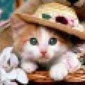 Kysnutý pudingový koláč (fotorecept) - recept   Varecha.sk 20 Min, Teddy Bear, Desserts, Animals, Tailgate Desserts, Deserts, Animales, Animaux, Teddy Bears