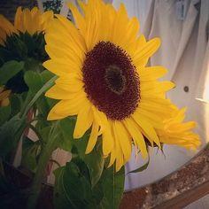 @themeetshop  Primavera en la calle Limón  #sunflowers #spring #summer #meetmadrid #condeduque #malasaña #condeduquegente #conceptstore #primavera #comerciolocal #handmade by condeduquegente