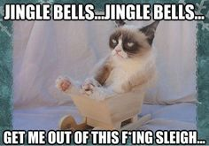Funny grumpy cat quotes, grumpy cat funny, funny grumpy cat, grouchy cat, grouchy quotes For more hilarious humor and funny pics visit http://www.bestfunnyjoke...