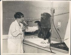 1927 Animal Beauty Parlor Dog Grooming Salon  Press photo of a chow