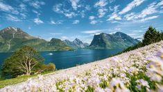 Vestlandet er kjent for storslagen natur med fjorder og fjell. Her ligger blant annet Geirangerfjorden, Sognefjorden, Flåmsbana og Preikestolen. Legg Norgesferien hit i år! Van Life, Norway, Grand Canyon, Cruise, Mountains, Nature, Travel, Summer, Naturaleza