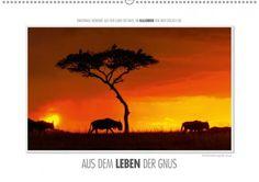 Mein Kalender des Tages: Emotionale Momente: Aus dem Leben der Gnus.