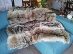 Coyote fur blanket, LOVE !