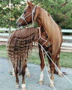 Barn Animals, Animals And Pets, Cute Animals, Horse Braiding, Majestic Horse, Most Beautiful Animals, All The Pretty Horses, Horse Pictures, Horse Breeds