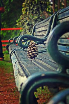 The Pine-Cone #2 by Divyan Rawal on 500px
