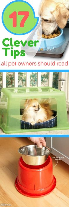 If you're a pet lover, this collection of tips is for you! Check out these clever and unusual ideas about how to make your pet happier, healthier and more comfortable, using items you'll find around the house.