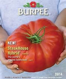 Burpee Seed Catalog with Tomato Dirt