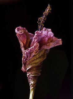 Flores Imaginadas 2 by juanmartinezphoto, via Flickr