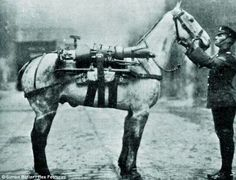 WW1 war horse. Looking for something? Check the horse.