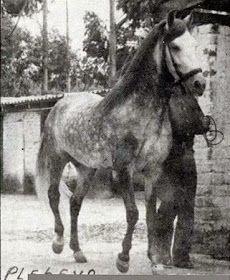 CABALLOS COLOMBIANOS: CABALLOS HISTORICOS DEL PASO FINO COLOMBIANO Horses, Brio, Animales, Horse
