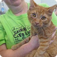 Adopt A Pet :: Julius 31883640 - Westampton, NJ