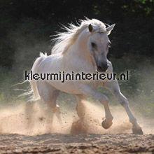 Paard fotobehang dieren