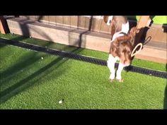 Lenny - Dogs Trust
