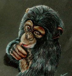 Baby Chimp on deviantART Prismacolor Colored Pencil on black Stonehenge paper Revised Version