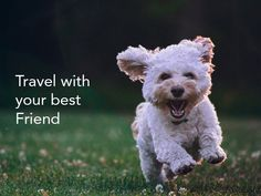 Taking your dog along can make the family vacation more fun for everyone, if you plan carefully. Here are some trip tips to make traveling with your dog enjoyable. Happiness Meaning, Happiness Quotes, Dog Training School, Fb Quote, Leadership Tips, Leadership Development, Feeling Frustrated, Praise God, What Is Like