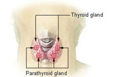 New study find causes of fibromyalgia linked to hormone imbalance, thyroid and adrenal problems