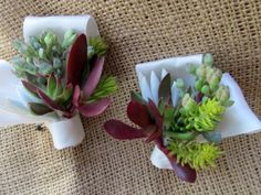 White Wedding Live Succulent Boutonnieres | Green Bride Guide