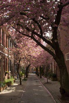 South Philly, (Philadelphia), Pennsylvania, USA dappled (by Incandenza)