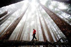 J'ai toujours été un amoureux de la nature, qui apprécie de passer du temps à l'extérieur et de m'imprégner de l'énergie positive des environs verdoyants. Il y a une pratique populaire au Japon app…