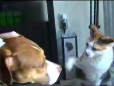 Kedi Köpeği Dövdü !!!
