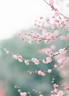 Spring blossoms. Beautiful. The sign of a fresh beginning.