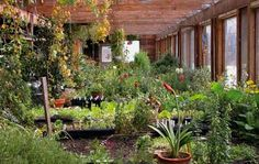 Permaculture bioshelter.