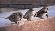 FUNNY BIRDS - gif