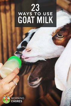 Goat Milk Uses: 23 Genius Ideas to Utilize Goat Milk on Your Everyday Live What can you do with milk goats? I know some might be very familiar with goat's milk and put it to use right away. But for some, it is rather intimidating. So today I wanted to share with you over 20 uses for goat's milk.